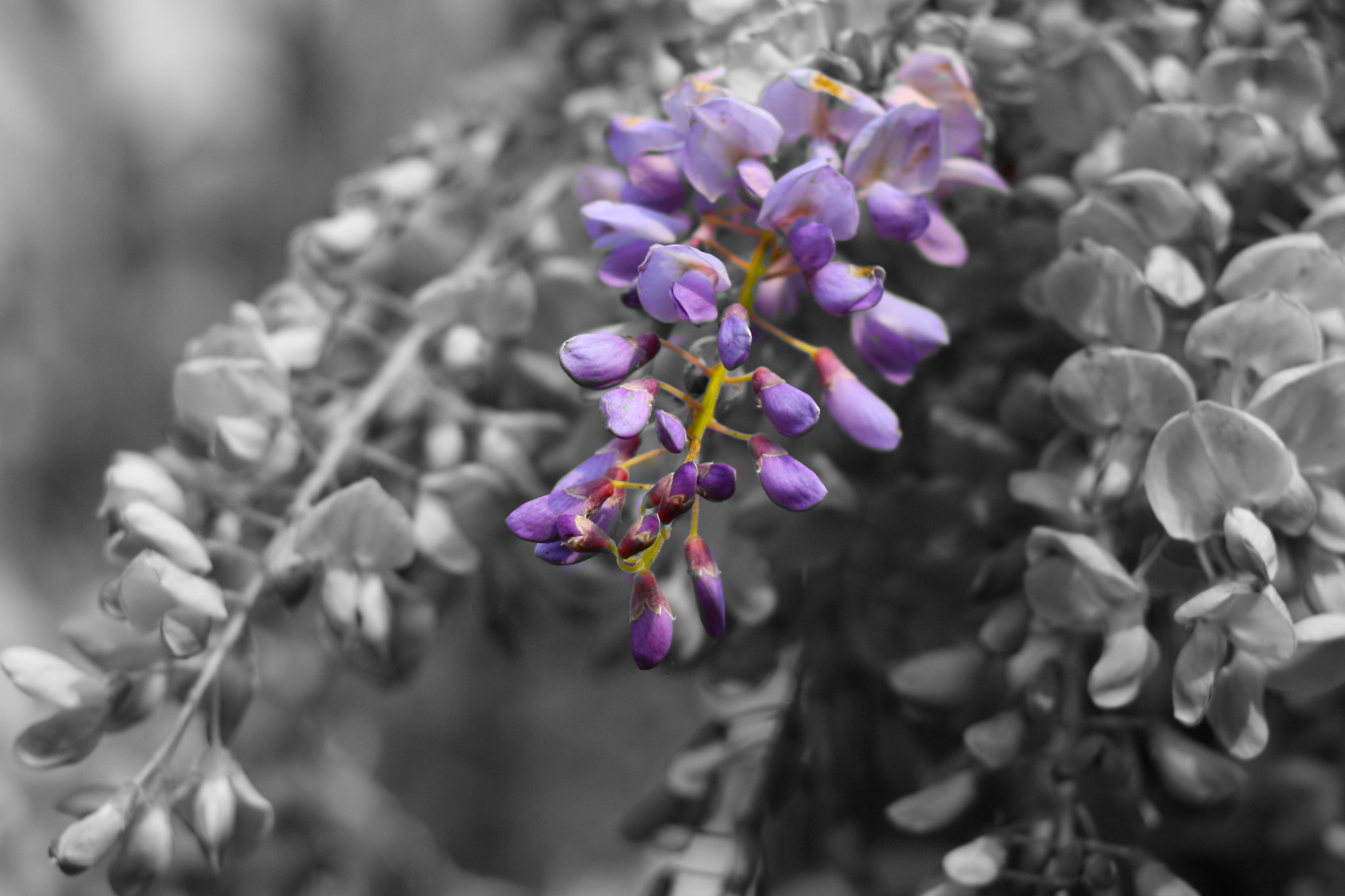 Photograph Spring dressed in violet by Giorgio Carraro on 500px