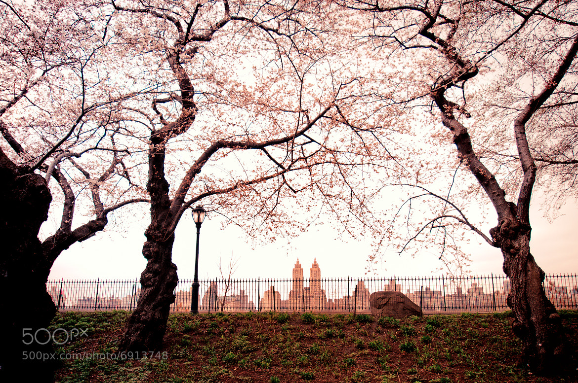 Photograph Central Park Spring Skyline by Vivienne Gucwa on 500px