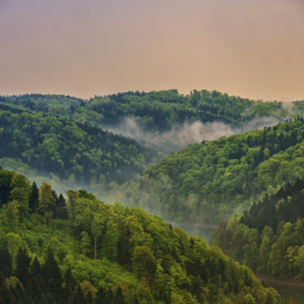Forest & mountains