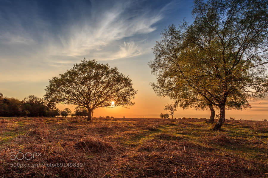 Sunset over the New Forest
