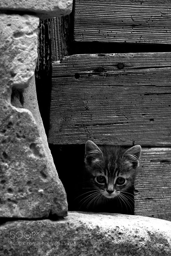 Curious Kitten by Jérôme Picard