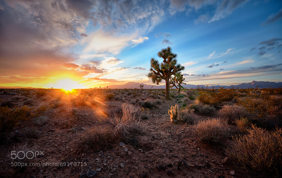Photograph Joshua tree sunset by Jeremy Mosher on 500px