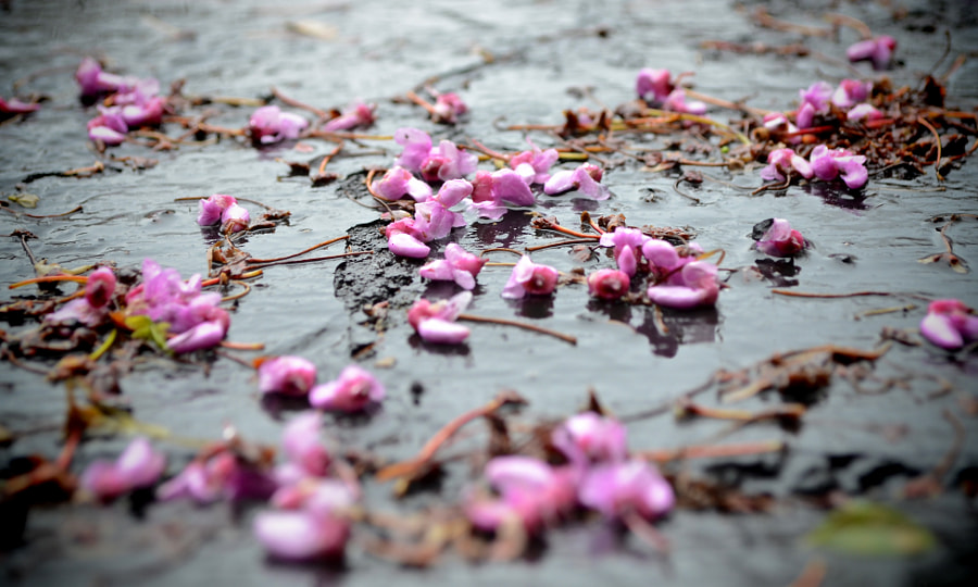 Fallen Blossoms by Tim Perdue on 500px.com