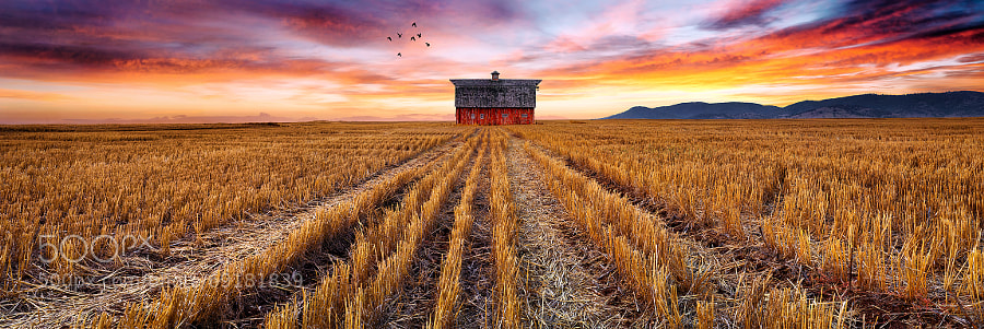 Photograph The Birds and the Barn by Bruce Hood on 500px