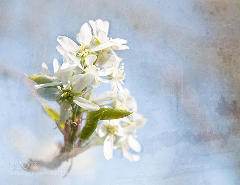 Photograph Fresh by David Lambert on 500px