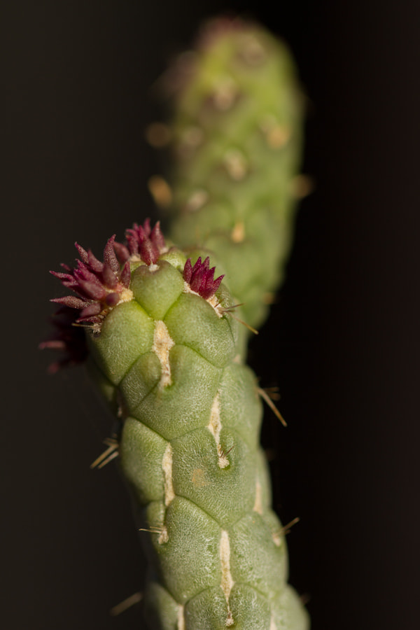 Photograph New Buds by Cal Holman on 500px