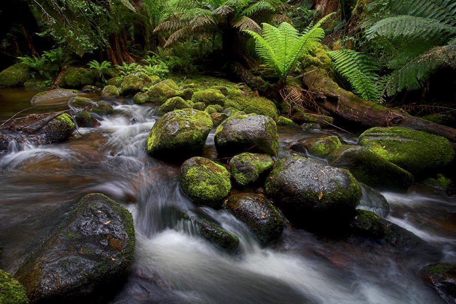 Photograph Go With The Flow by Peter Daalder on 500px