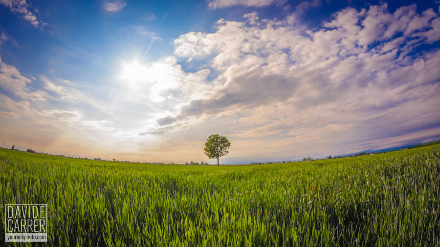 Green field on Easter day by Davide Carrer on 500px.com