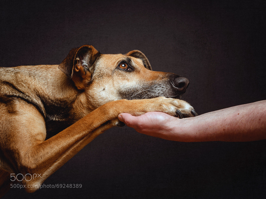 Photograph Affection by Elke Vogelsang on 500px