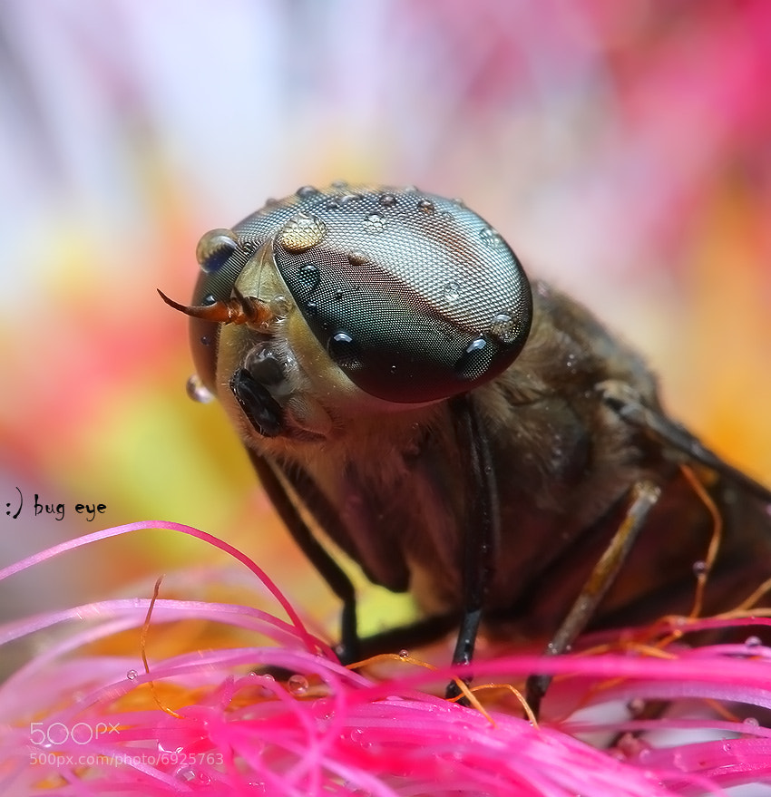 Photograph color today  by bug eye :) on 500px