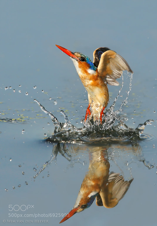 Photograph Water Ballet by Wim van den Heever on 500px