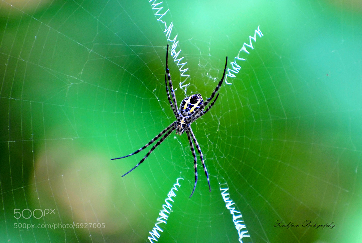 Photograph Spider by Sandipan Bhattacharya on 500px