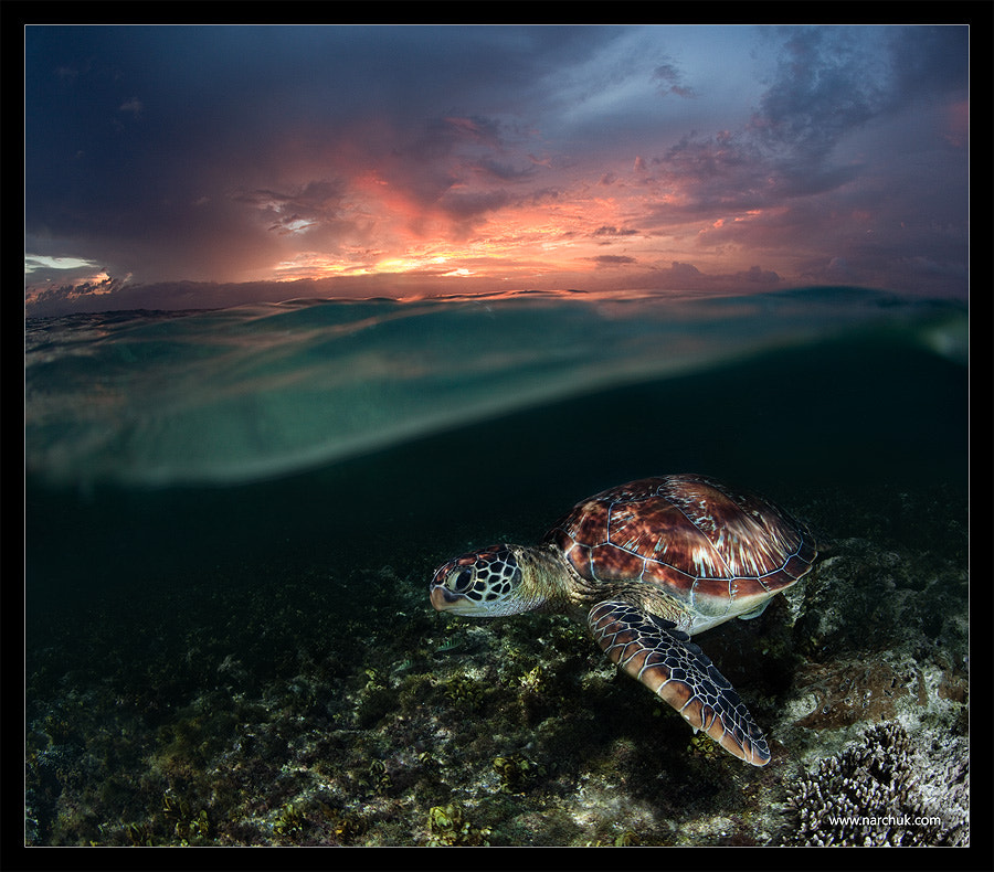 Photograph Sunset swim by Andrey Narchuk on 500px