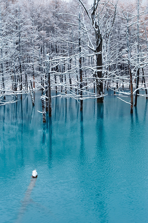 Photograph Blue Pond in November by Kent Shiraishi on 500px