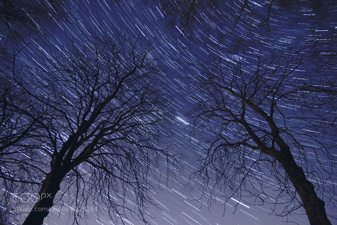 Photograph Starry Trees by Matthew Vandeputte on 500px