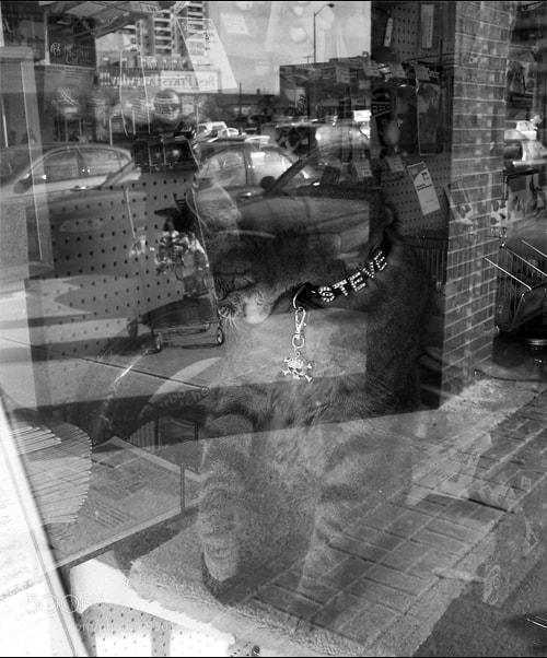 Photograph Steve by neighbourhood watch on 500px