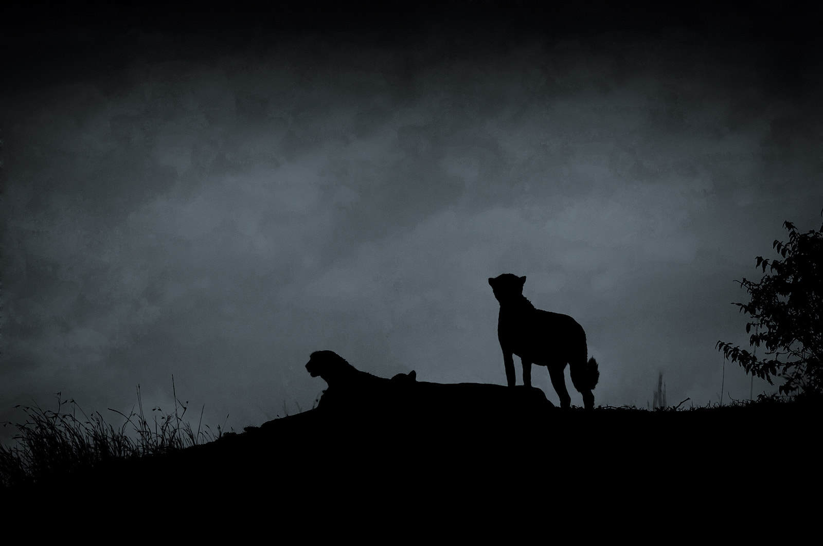 Photograph Cheetah bros  silhouette by Marc MOL on 500px