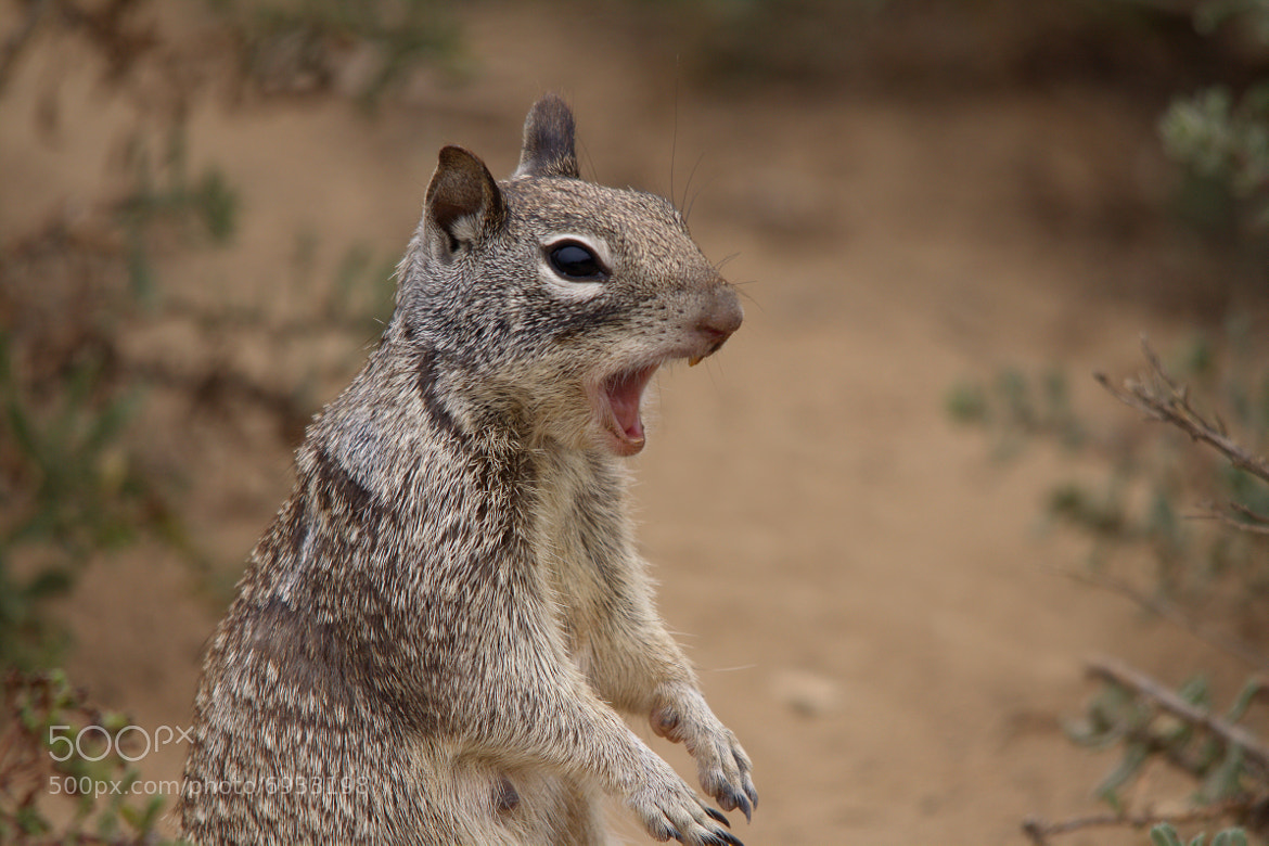 Photograph Squirrel! by Christopher Payne on 500px