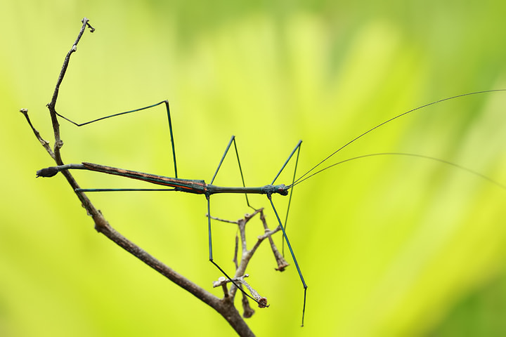 Photograph The Walking Stick by Robin Lung on 500px