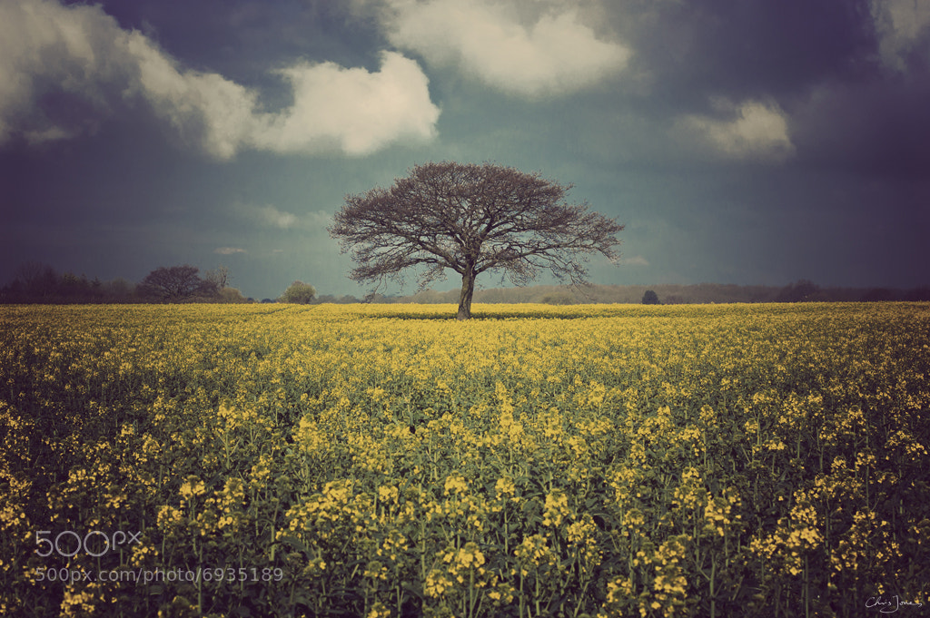 Photograph Gold and blue by Chris Jones on 500px
