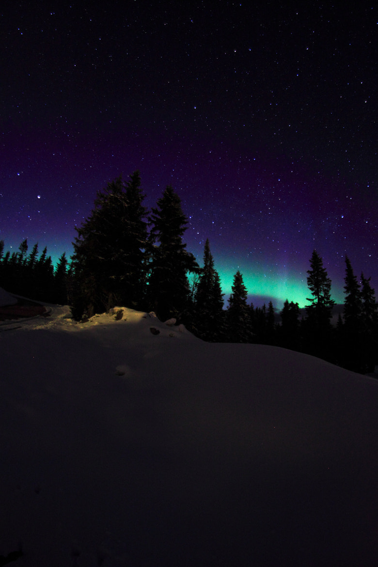 Photograph Aurora in the trees by Timothy  Boocock on 500px