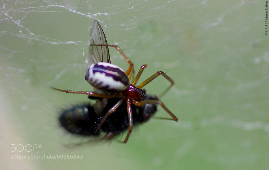 Photograph killing spiders by Mehmet Çoban on 500px