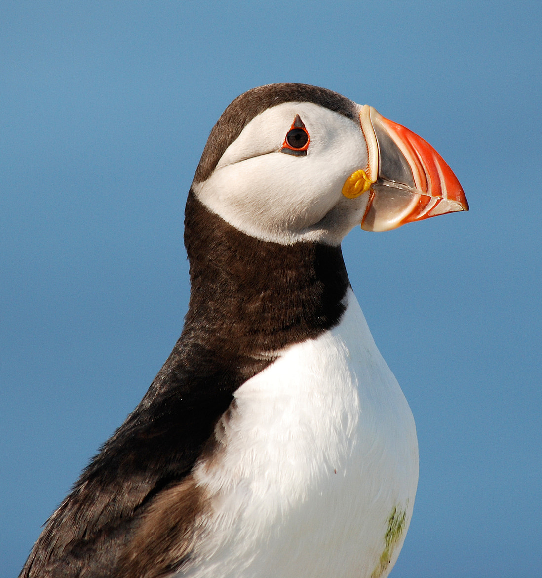 Photograph Atlantic Puffin by Bill Lynch on 500px