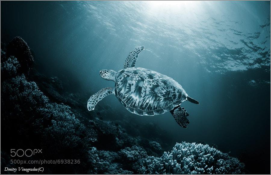 Photograph The sea of light by Dmitry Vinogradov on 500px