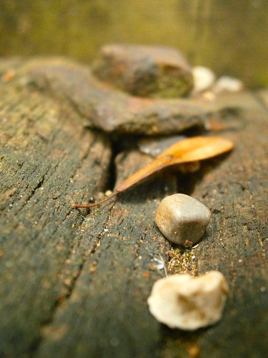 Photograph Macro by I am 12 y/o on 500px