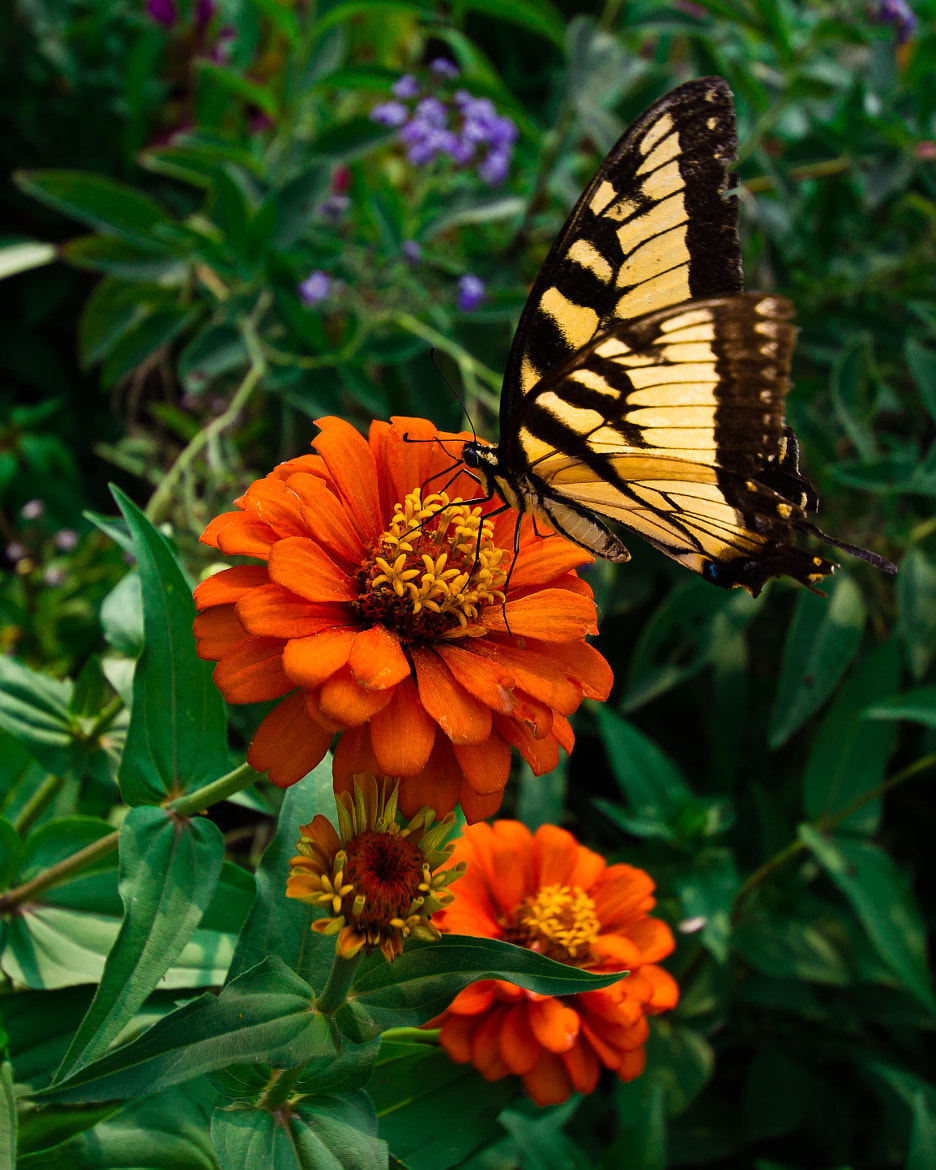 Photograph Butterfly by Scott Newman on 500px