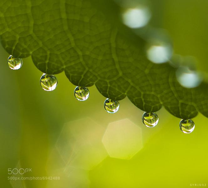 Photograph Drops 3 by Michał Żak on 500px