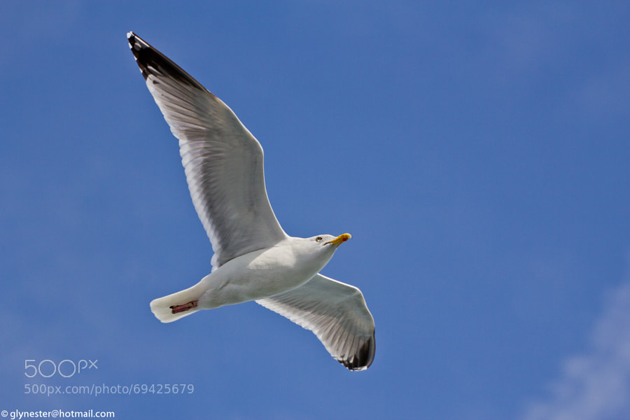 How do you make a title about a seagull more interesting?  Well you could try translating it into French... :)