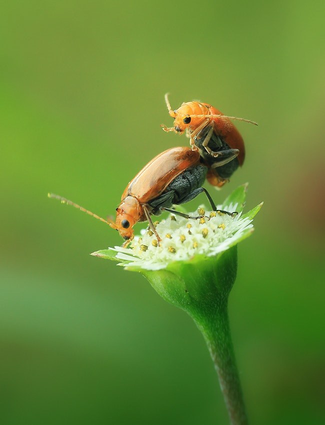 Photograph Beautiful Love II by Arief Perdana on 500px