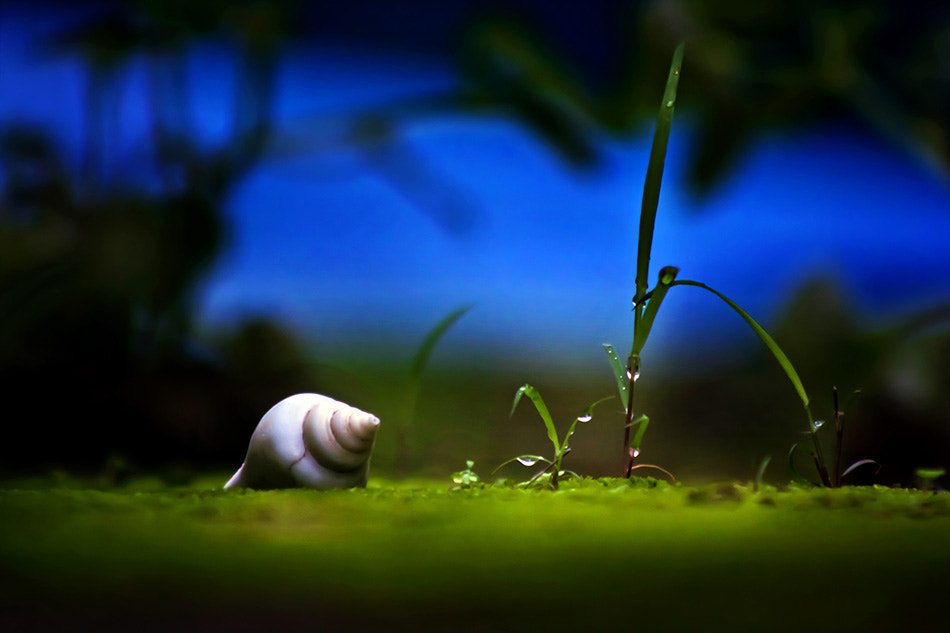 Photograph Si Put IH by Mashuri Ruly on 500px