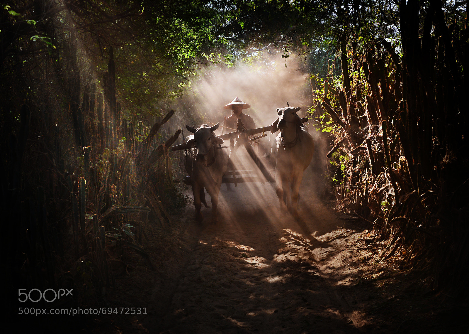 Photograph Cart Rider by Weerapong Chaipuck on 500px