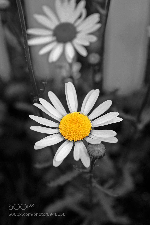Photograph Singularity by Nicoline Korsvold on 500px