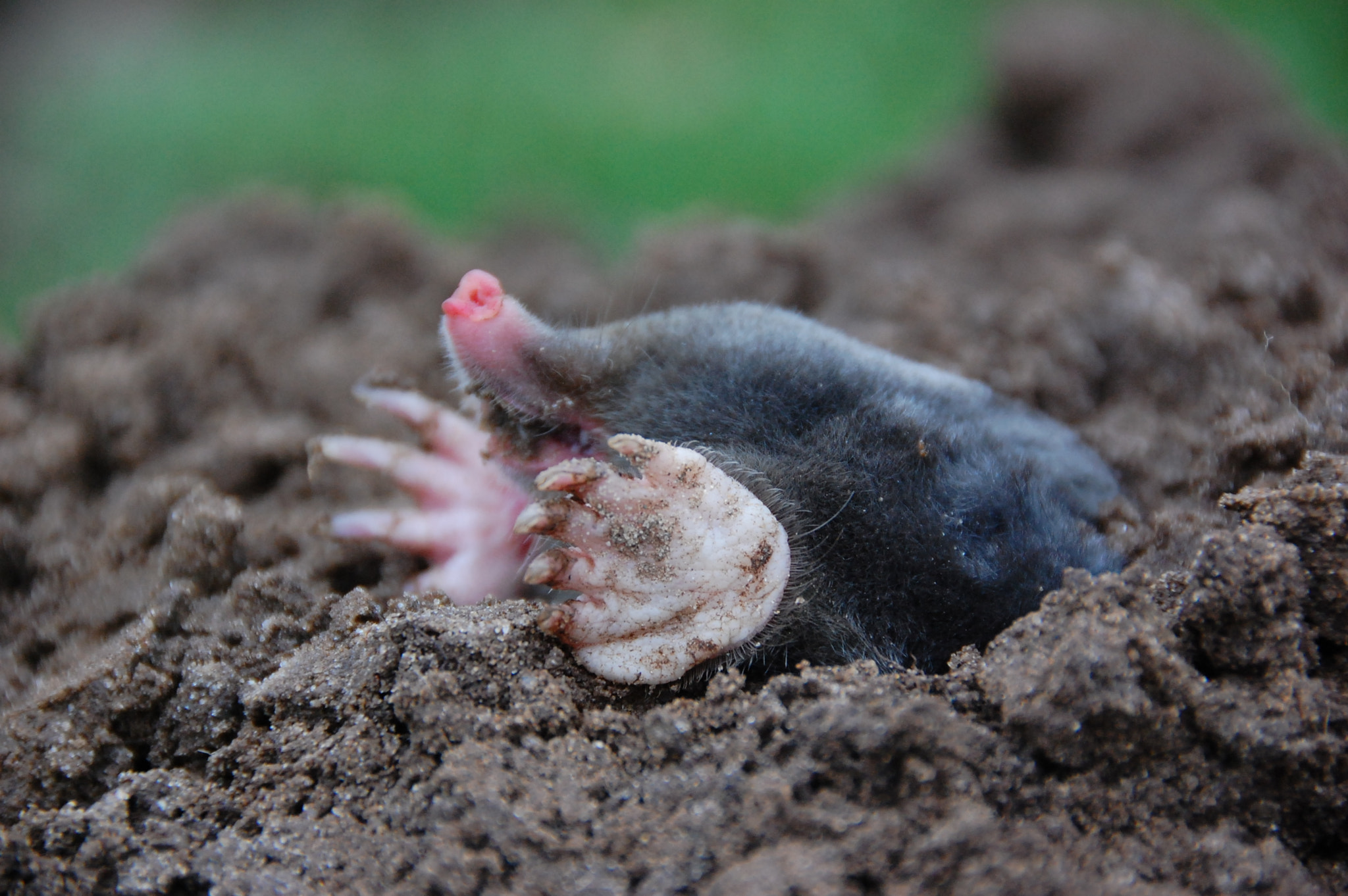 Photograph Mole by Ruud Eelderink on 500px