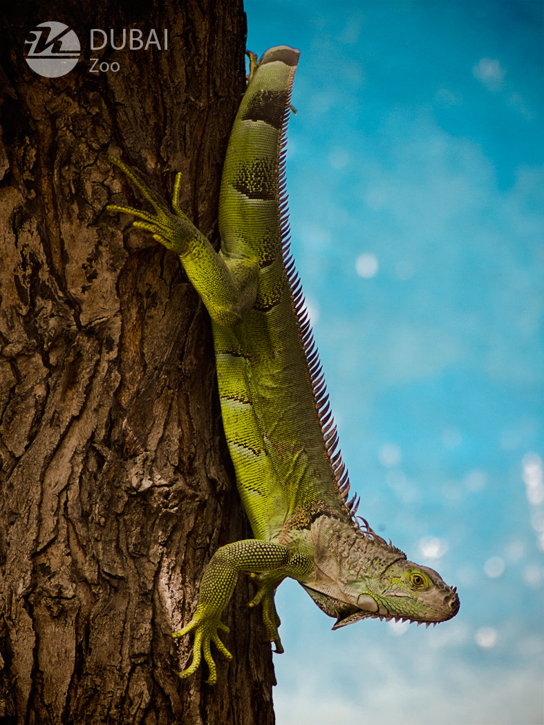 Photograph Lizard in the Shade by Khaldoon Maliki on 500px
