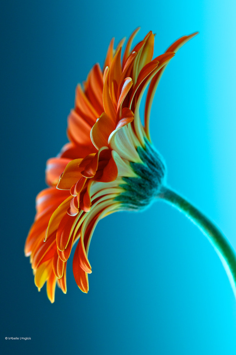 Photograph Orange and blue by Isabelle Langlois on 500px