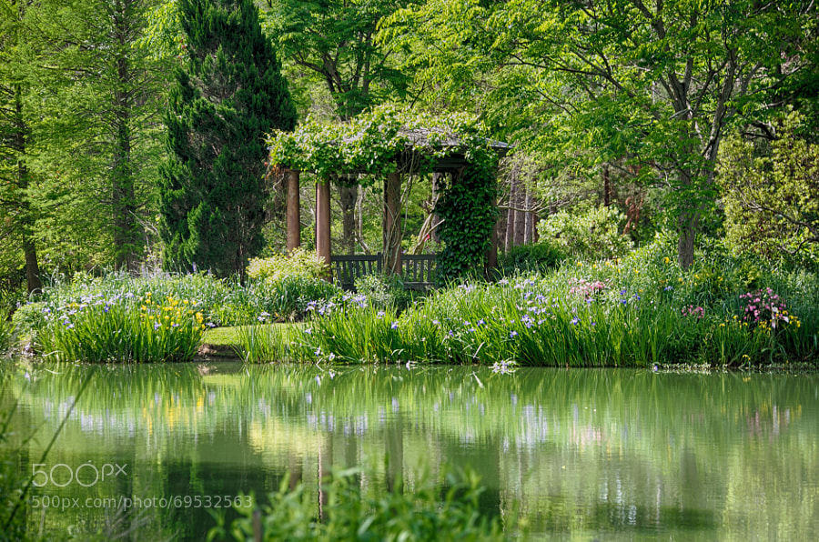 Photograph Hidden Garden by Phillip Guyton on 500px