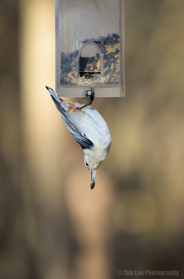 Photograph Just hanging by Tim Lau on 500px