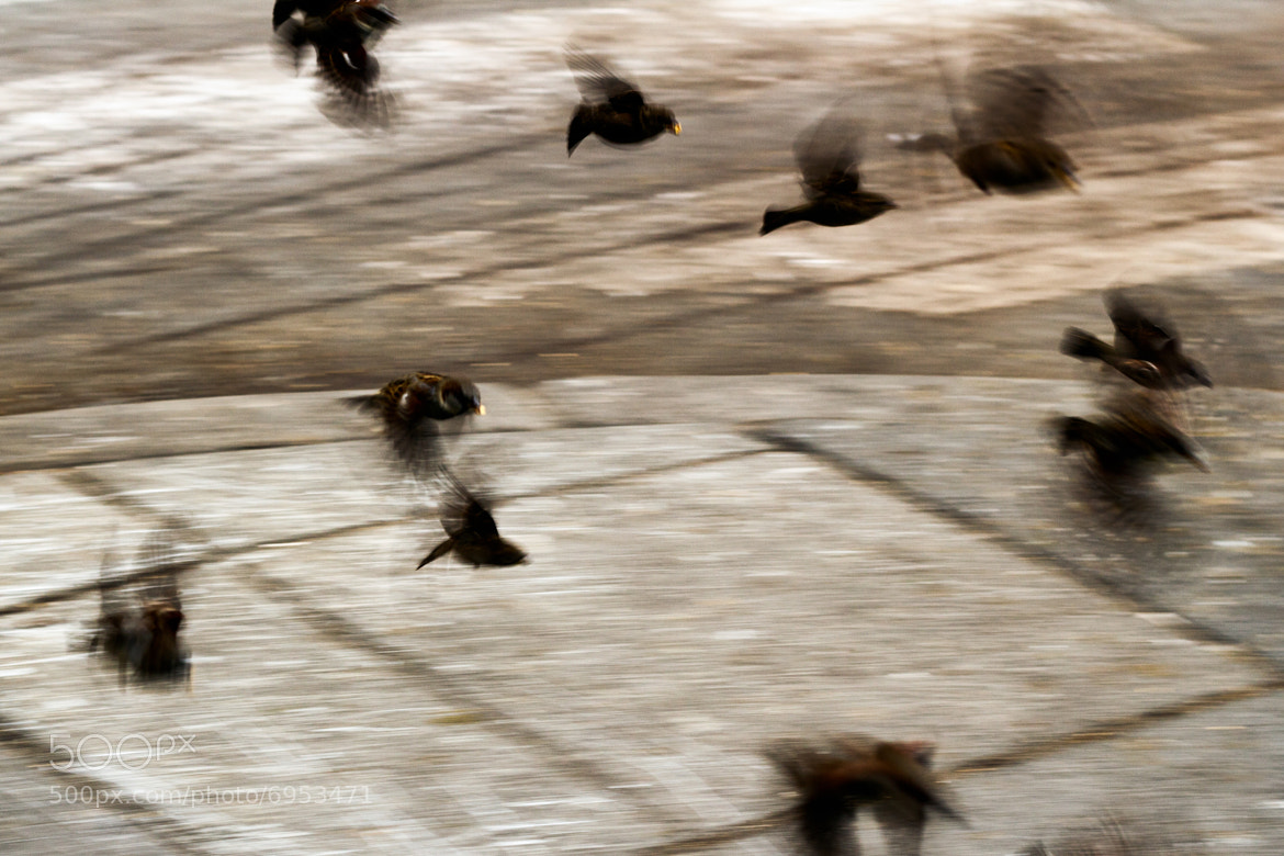 Photograph Birds in Flight II by Gustavo Castillo on 500px