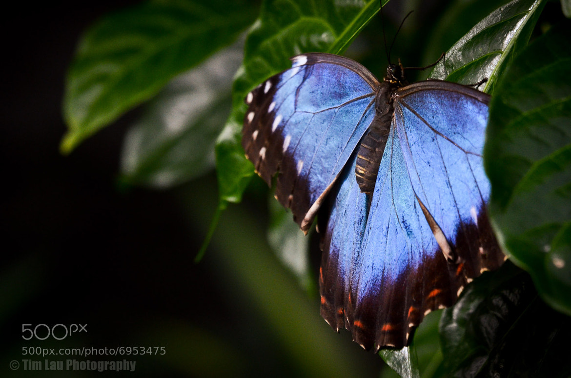 Photograph Beautifully Blue by Tim Lau on 500px