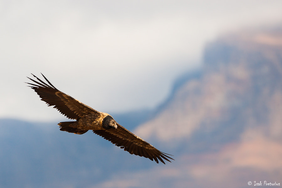 Photograph Soaring the berg by Isak Pretorius on 500px