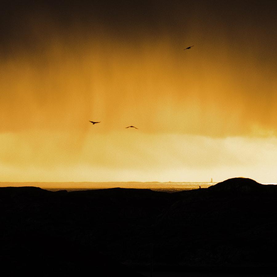 Stormcrows