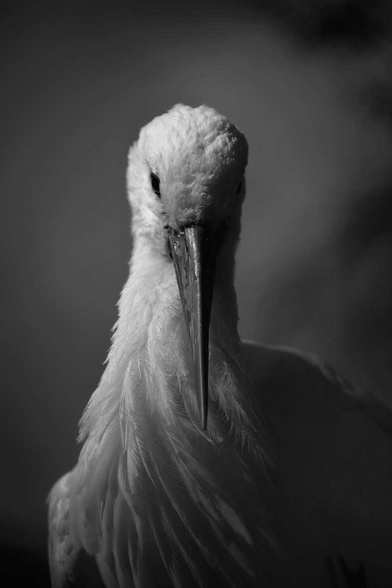 Photograph Stork by Theo Esenwein on 500px
