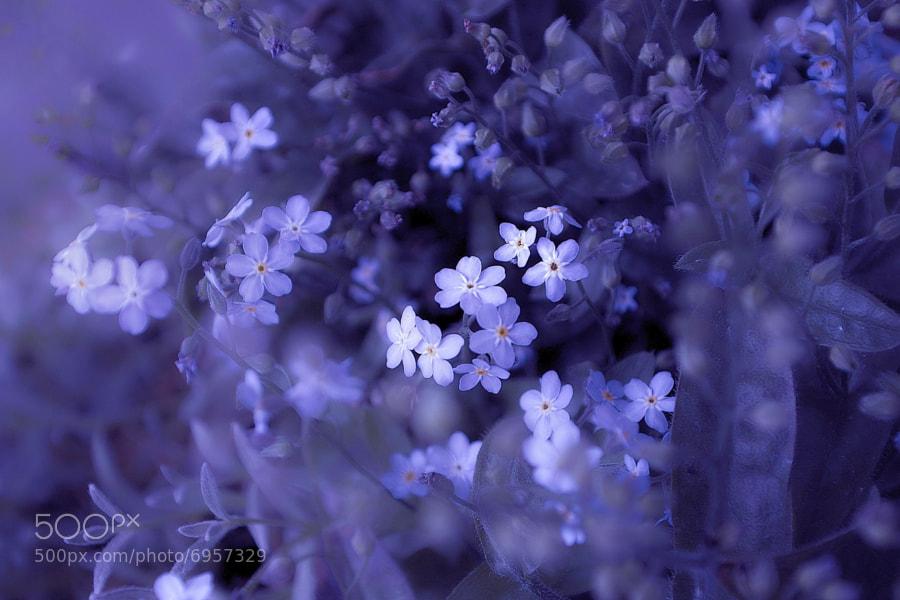 Epic of blue flower by Lafugue Logos (lafuguelogos)) on 500px.com