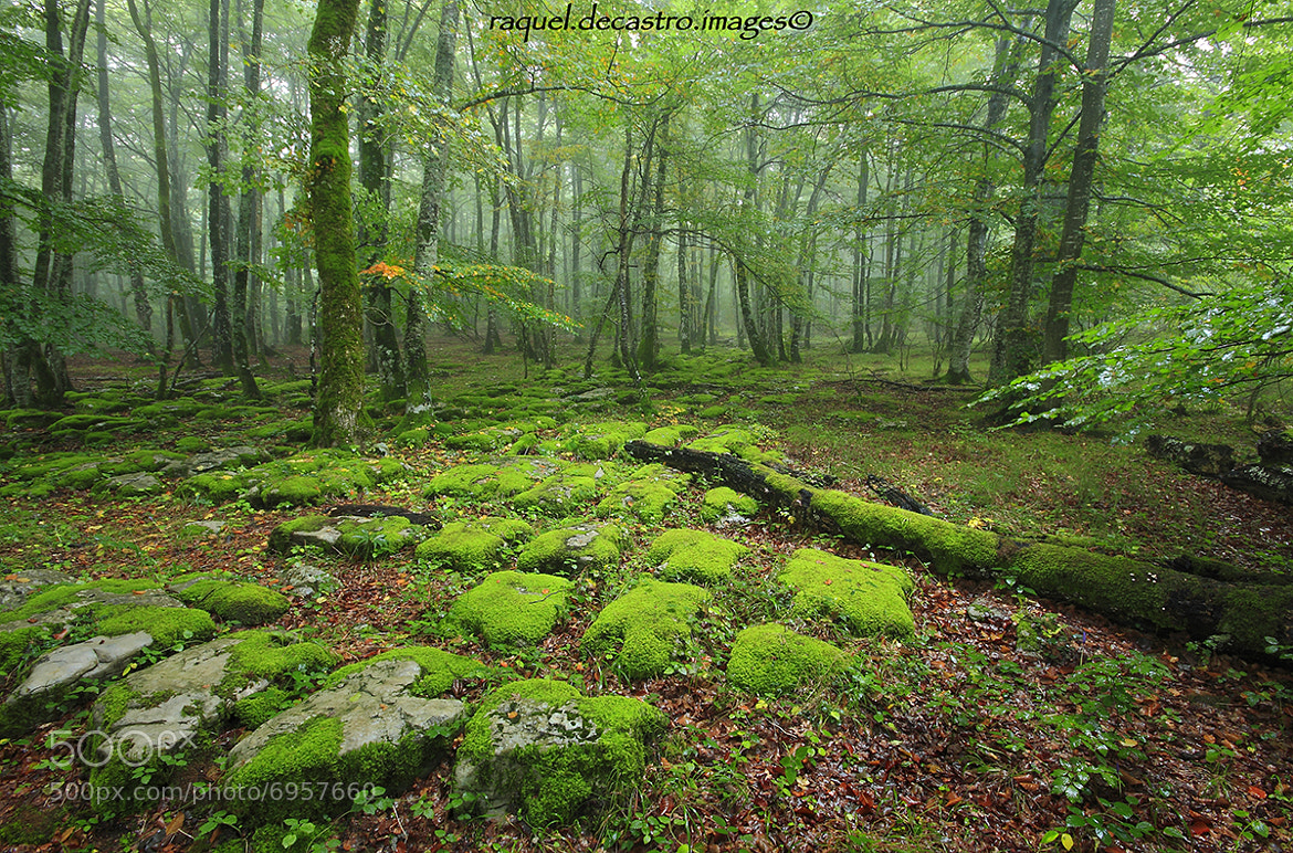 Photograph The heart of the forest. by Raquel de Castro on 500px