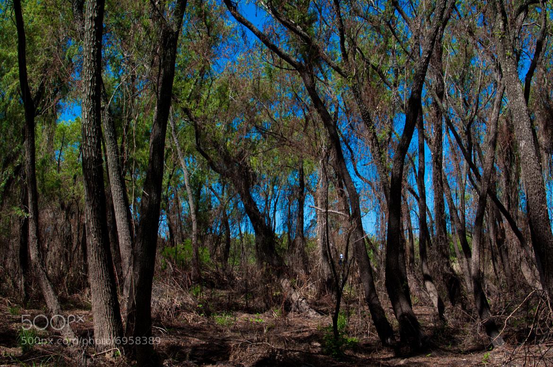 Photograph El bosque by Maximiliano Martino on 500px