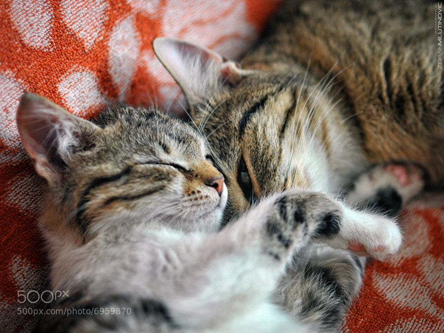 Photograph ♥ A sister's love ♥ by Zoran Milutinovic on 500px